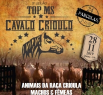 3° LEILAO TOP MS CAVALO CRIOULO